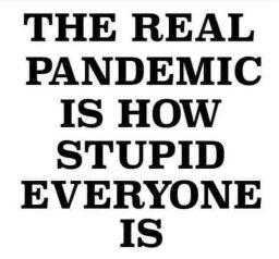 The real epidemic is how stupid people are